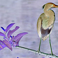Blue Heron Colorized by Stan Roban