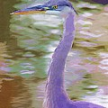 Blue Heron by Donna Bentley