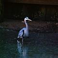 Blue Heron by Dora Hembree