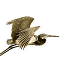 Blue Heron In Sepia by William Haney