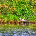Blue Heron-in The Swamp-20 by Robert Pearson