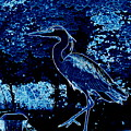 Blue Heron by James Hill