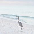 Blue Heron by Mechala Matthews