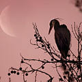 The Heron And The Moon by Rob Blair