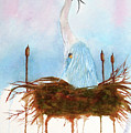 Blue Heron Nesting by Rich Stedman