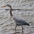 Blue Heron  On The Lake by Robert Smith