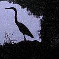 Blue Heron by Patricia Bolgosano