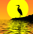 Blue Heron Sunset by Rich Leighton