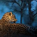 Blue Hour Leopard by Daryl L Hunter