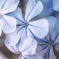 Blue Houres, Blue Flowers by Hanna Tor