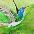 Blue Humming Bird by Barbara King