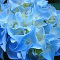 Blue Hydrangea Floral Flowers Art Prints Baslee Troutman by Baslee Troutman