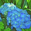 Blue Hydrangea In Bellingrath Gardens In Mobile, Alabama2 by Ruth Hager