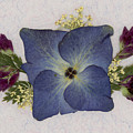 Blue Hydrangea Pressed Floral Design by Em Witherspoon