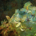 Blue Hydrangea Sunset Impression 1203 Idp_2 by Steven Ward