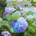 Blue Hydrangeas by Christina Maassen