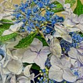 Blue Hydrangeas by Susan Bryant