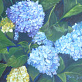 Blue Hydranges by Gloria Smith