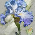 Blue Iris 2 by Mark Mille