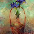 Blue Iris In A Basket by Lois Bryan