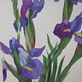 Blue Iris by Jeff Friedman