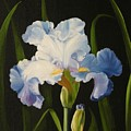Blue Iris by Joni McPherson
