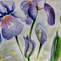 Blue Iris by Kathy Mitchell