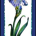 Blue Iris by Shirley Heyn