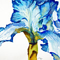 Blue Iris by Tina Storey