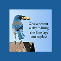 Blue Jay And A Peanut by Patricia Barmatz