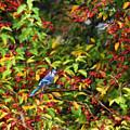 Blue Jay And Berries by Kerri Farley