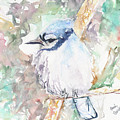Blue Jay by Beverly Bronson