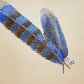Blue Jay Feathers by J R Seymour