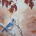 Blue Jay - Geai Bleu by Christine Grenier