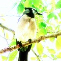Blue Jay IIi by Clarice  Lakota
