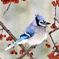 Blue Jay In Snowfall 3 by Betty LaRue