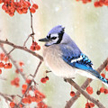 Blue Jay In Snowfall by Betty LaRue