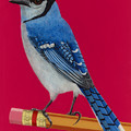 Bluejay Perched On Pencil by Jackie Besteman
