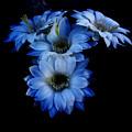 Blue by John Gee