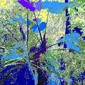 Blue Jungle by Ian  MacDonald