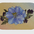Blue Larkspur And Oregano Pressed Flower Arrangement by Em Witherspoon