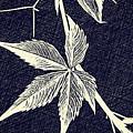 Blue Leaf by Lucia Sirna