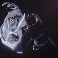 Blue Light by Stacey Jasmin