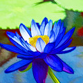 Blue Lotus Flower by Jeelan Clark
