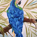 Blue Macaw by Sherry Winkler