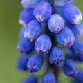 Blue Magic by Jess Kruk