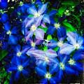 Blue by Matt Suess
