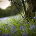 Blue Meadow by Angel Ciesniarska