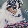 Blue Merle Collie Pup by Lee Ann Shepard