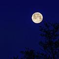 Blue Moon by Joe Holley